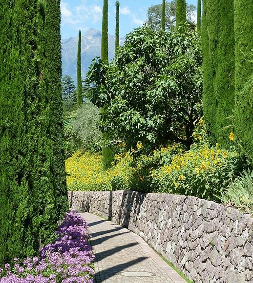Lebensbaum Kaufen_2